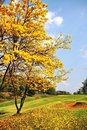 Yellow flower at golf course Royalty Free Stock Photography