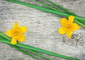 Yellow flower and green grass on the old wood rustic background Royalty Free Stock Photos