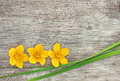 Yellow flower and green grass on the old wood rustic background Stock Photo