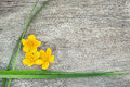 Yellow flower and green grass on the old wood rustic background Royalty Free Stock Images