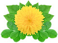 Yellow flower with green leaf Royalty Free Stock Photos