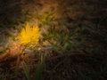 Yellow flower and green leaves on sunlight