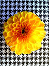 Yellow flower on houndstooth Royalty Free Stock Photo