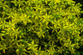 Yellow flower moss Royalty Free Stock Photo