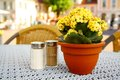 Yellow flower with pepper and salt at the table in beer garden Royalty Free Stock Image