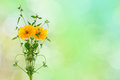 Yellow flower and small tree on nature background Royalty Free Stock Photo