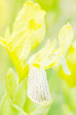 Yellow flower soft focus close up of flowers Royalty Free Stock Photography