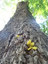 Yellow flower on tree bark Royalty Free Stock Photo