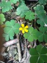 The yellow flower in village.