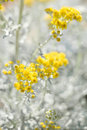 Yellow flowering plant. Stock Photo