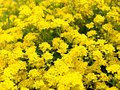 Yellow flowers. Stock Photos