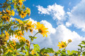 Yellow flowers against blue cloudy sky Stock Photography