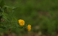 Yellow flowers beautiful blurred background Stock Photo