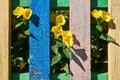 Yellow flowers behind a colorful fence. Royalty Free Stock Photo