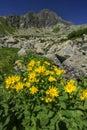 Yellow flowers at Furkotska dolina valley