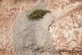 Yellow flowers growing in concrete on earthy red limestone rock la zenia costa blanca spain Royalty Free Stock Image