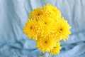 Yellow flowers hrysanthemums in a vase on a blue background Royalty Free Stock Photo