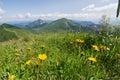Žlté kvety na horskom hrebeni