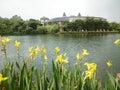 Yellow Flowers Near The Lake