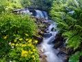 Yellow flowers near a mountain stream Royalty Free Stock Photo
