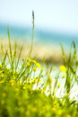 Yellow flowers near sea.  Stock Photos