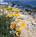 Yellow flowers - seaside Royalty Free Stock Photos