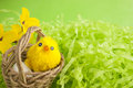 Yellow fluffy Easter chicken in a basket Royalty Free Stock Photos