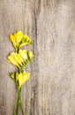 Yellow freesia flower on wooden background copy space Royalty Free Stock Photography