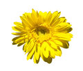 Yellow gerbera on blue sky Royalty Free Stock Photography