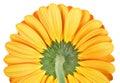 Yellow gerbera close-up Royalty Free Stock Images