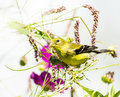 Yellow Goldfinch with wild flowers Royalty Free Stock Photo
