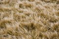 Yellow grass texture abstract natural background Royalty Free Stock Photography