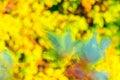 Yellow Green Blue Blur Backgro...