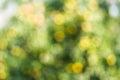 Yellow  Green Blur Background ...