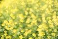 Yellow Green Floral Bokeh Back...
