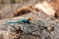 Yellow and green lizard against the background of stone Stock Photos