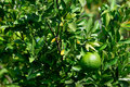 Yellow green orange tree Royalty Free Stock Photos