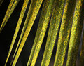 Yellow green palm leaves texture background Royalty Free Stock Photos