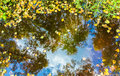 Yellow and green tree leaves in the puddle with reflection of autumn blue sky with cloud. Royalty Free Stock Photo
