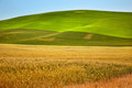 Yellow Green Wheat Fields Palouse Washington Royalty Free Stock Photo