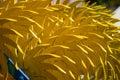 Yellow harrow Royalty Free Stock Images