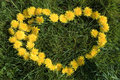 Yellow heart natural love background from dandelion Stock Photos