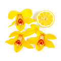Yellow image of orchid flowers and half a lemon on white clipping path included Royalty Free Stock Photo