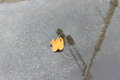 Yellow leaf in rain puddle Royalty Free Stock Photo