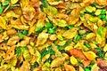Yellow leafs Stock Photos