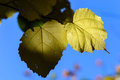 Yellow leave in autumn Royalty Free Stock Photo