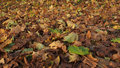 Yellow leaves autumn and green Royalty Free Stock Photos