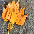 Yellow leaves on the ground autumn Stock Photo