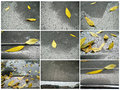 The yellow leaves and the raindrop formed after fall of scenery Royalty Free Stock Photos