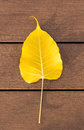 Yellow leaves on wood floor Stock Photo
